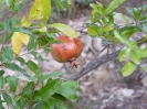 frutta-1