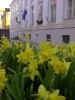 Springtime in Estonia-1