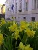 Springtime in Estonia-1